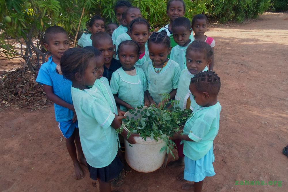 Moringa seedling to be planted in the school garden in Madagsacar