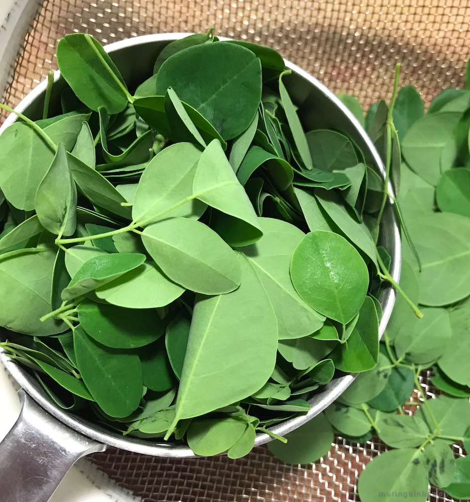 A cup of stripped and cleaned moringa leaves