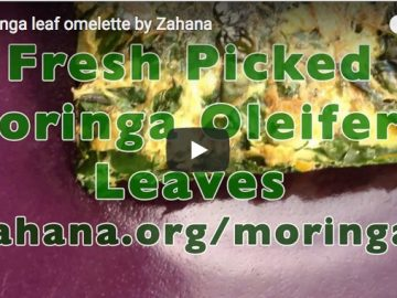 YouTube video about making a moringa oleifera omlette