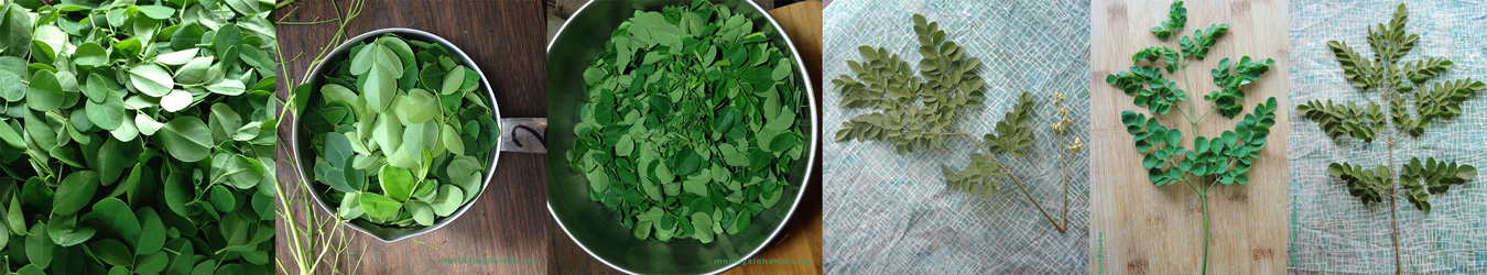 Moringa in Hawaii