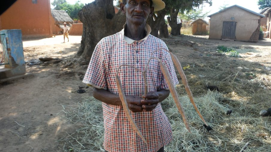 Zahana's representative in the village in Madagascar with moringa oleifera seed pods
