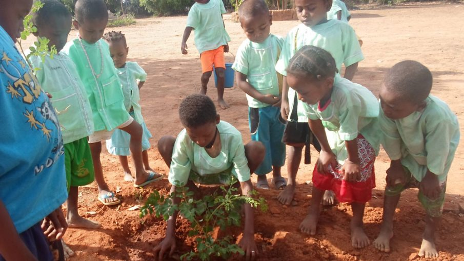Moringa Seedling in the schoolyard in Madagscar
