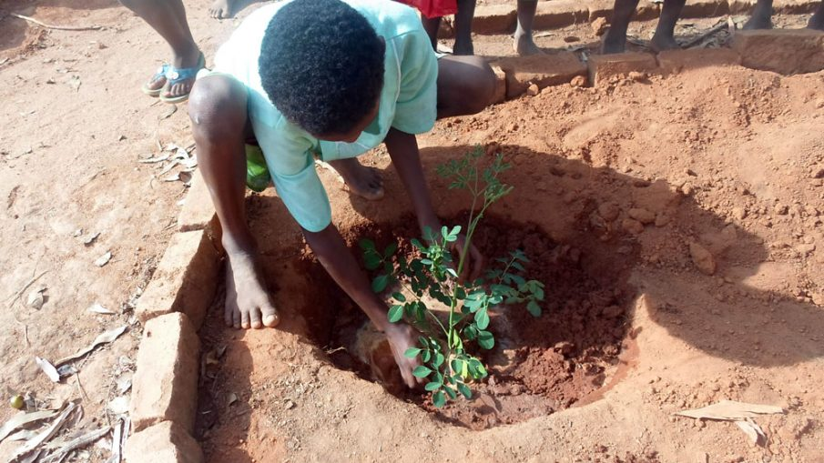Planting a moringa seedling in a village schoolyard in Madagascar